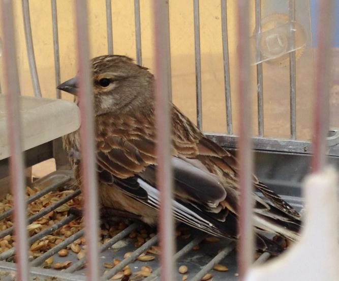 pájaro jaula